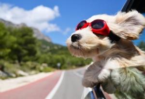 Foto:  Pet Travel