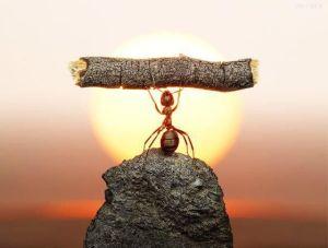 oraculo-esfuerzo-dedicacion-constancia-consejos-terapia-inpiracion-lunes.-2jpg
