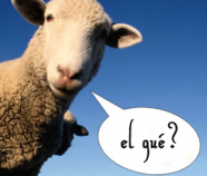 hablar-idiomas-mundo-comunicacion-inspiracion-4