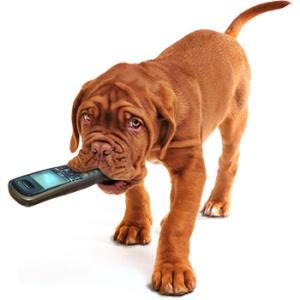 planetagoma-oraculo-gomer-hablar-comunicacion-consejo-motivacion-inspiracion-perro-movil