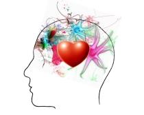 planetagoma-estrategias-para-la-vida-elsa-punset-cerebro