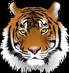planetagoma-oraculo-gomer-elige-un-animal-consejo-tigre